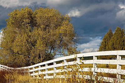 Fence Art Print by Michele Wright