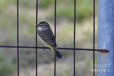 Photograph - Fence Perch by Darla Wood