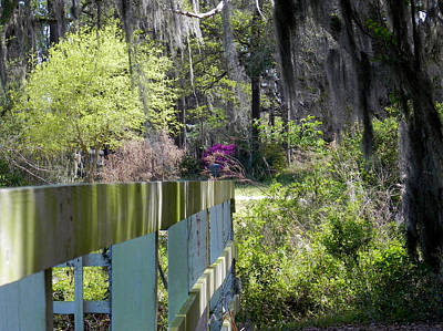 Fence Points The Way Art Print by Patricia Greer