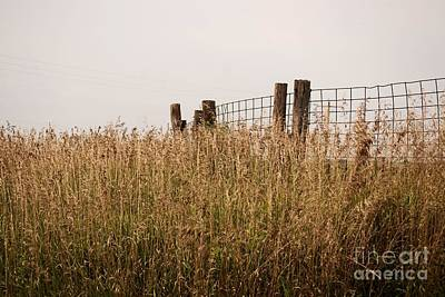 Photograph - Fence Post by Mark McReynolds