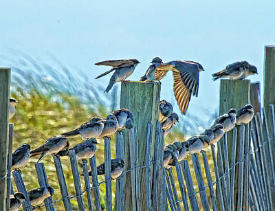 Fence Sitters Art Print by Constantine Gregory