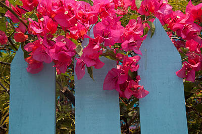 Photograph - Fence With Bouganvillia by Susan Rovira