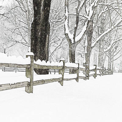 Fenced In Forest Art Print by John Stephens