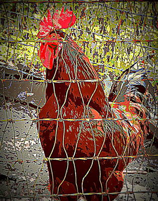 Photograph - Fenced In Red Rooster by Sheri McLeroy