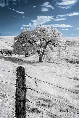 Photograph - Fenced In by Scott Bean