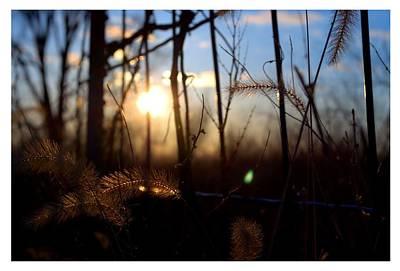 Fenced In Sunset Original