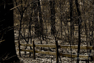 Recently Sold - Frank J Casella Royalty-Free and Rights-Managed Images - Fence In The Woods by Frank J Casella