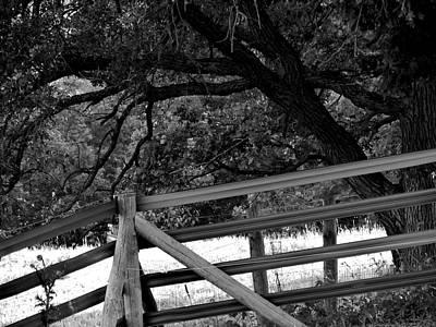 Photograph - Fenceline by Bridget Johnson