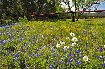 Country Photograph - Fenceline Wildflowers by Lynn Bauer