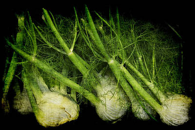 Photograph - Flemish Fennel Art by Jennifer Wright