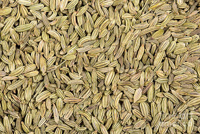 Aniseed Photograph - Fennel Seeds by Jane Rix