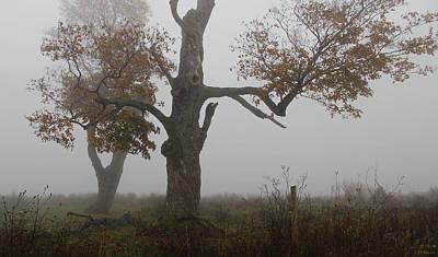 Fenner Trees In Fog Art Print
