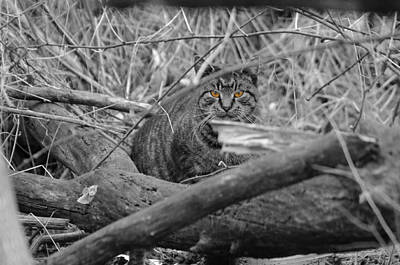 Photograph - Feral Cat by Greg Graham