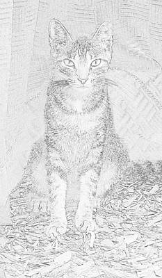 Photograph - Feral Cat Ms. Kit  by Strangefire Art       Scylla Liscombe