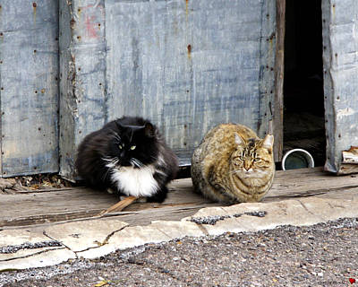 Photograph - Feral Cats by Rhonda McDougall