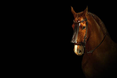 Horse Photograph - Feria 1 - Collection  by Andy Armfield