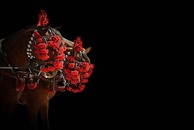 Equine Photograph - Feria 3 - Collection by Andy Armfield