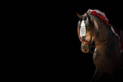 Horse Photograph - Feria 6 - Collection by Andy Armfield