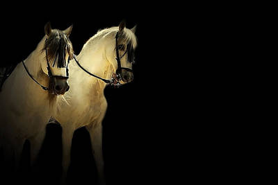 White Horses Photograph - Feria 7 - Collection by Andy Armfield