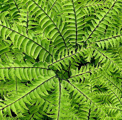 Fern Abstract Art Print