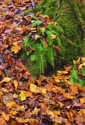 Photograph - Fern Among Golden Fall by Mary Frances