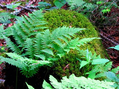 Fern And Moss Art Print