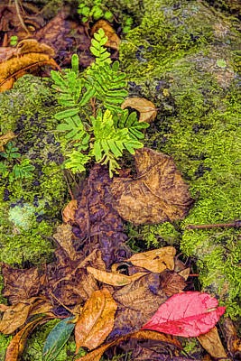 Photograph - Fern And Red Leaf by Lewis Mann