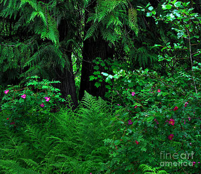 Photograph - Fern And Wild Roses by Sam Rosen