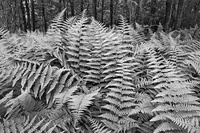 And Photograph - Fern by Bill Wakeley