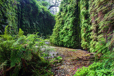 Photograph - Fern Canyon In Redwood National Park by Pierre Leclerc Photography