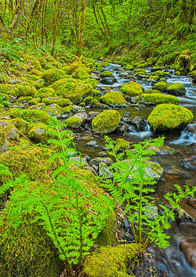 Photograph - Fern Creek by Judi Baker