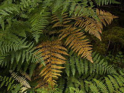 Photograph - Fern Design by Jean Noren