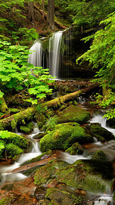 Old Growth Forest Photograph - Fern Falls Panoramic by Leland D Howard