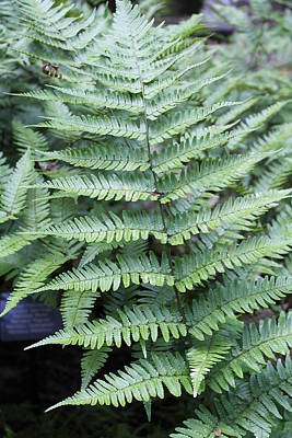 Andrea Grist Wall Art - Photograph - Fern Frond by Andrea K Grist