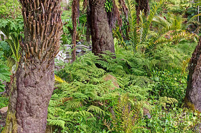 Photograph - Fern Garden by Kate Brown
