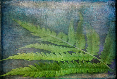 Photograph - Fern by Garvin Hunter