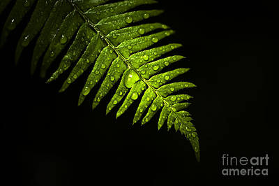 Balance In Life Photograph - Fern Highlight by Jim Corwin