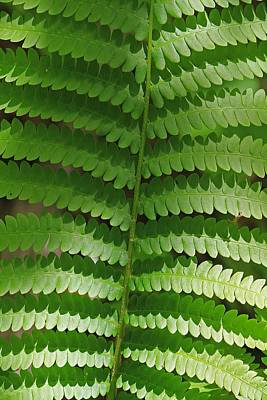 Photograph - Fern In Shade At Moore State Park by Michael Saunders