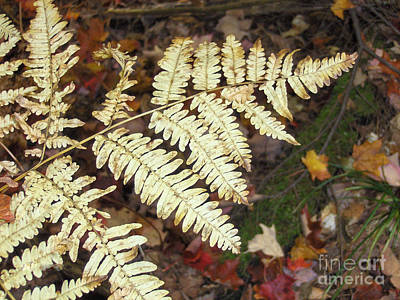 Photograph - Fern In The Forest by Brenda Brown