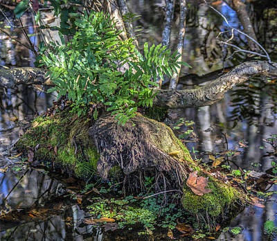 Fern In The Swamp Art Print by Jane Luxton