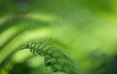 Photograph - Fern Leaf 1. Healing Art by Jenny Rainbow