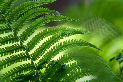 Photograph - Fern Leaf 2. Healing Art by Jenny Rainbow