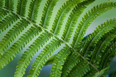 Photograph - Fern Leaf After Rain. Healing Art by Jenny Rainbow