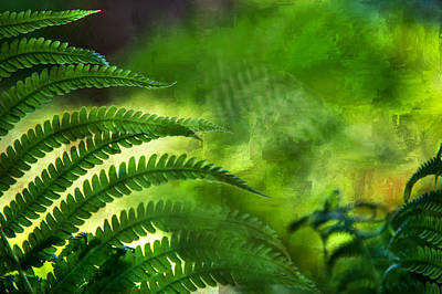 Photograph - Fern Leaf. Healing Art by Jenny Rainbow