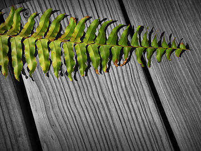 Photograph - Fern Leaf On A Gray Wooden Deck by Randall Nyhof