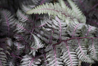 Photograph - Fern by Mary-Lee Sanders