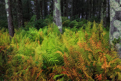 Photograph - Fern Of Autumn by Bill Wakeley