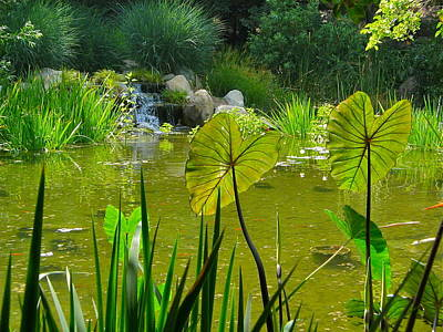 Photograph - Fern Pond by Denise Mazzocco