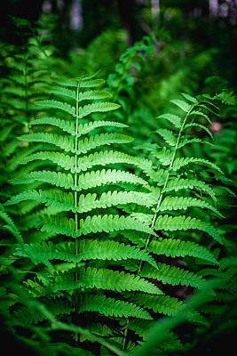 Photograph - Fern by Robert Clifford