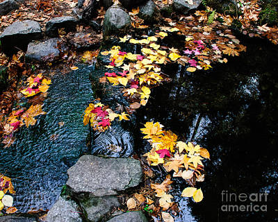 Photograph - Fern Spring Yosemite by Terry Garvin